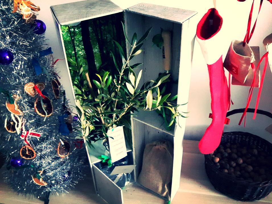 podaruj-drzewko2